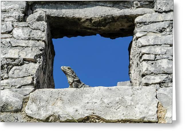 Iguana At Tulum Ruins Greeting Card