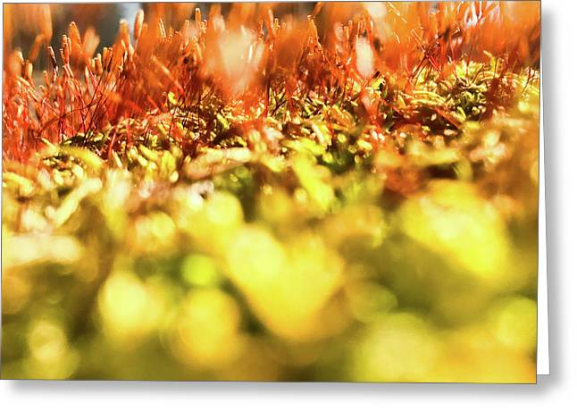 Greeting Card featuring the photograph Orange Moss 3 by Atousa Raissyan