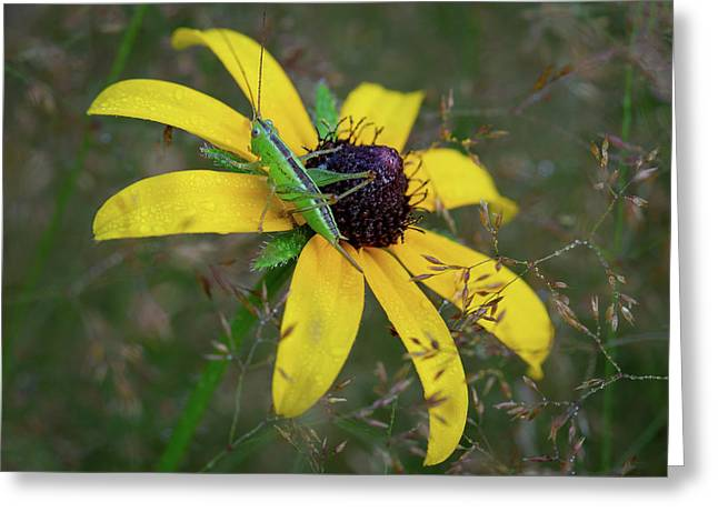 Greeting Card featuring the photograph In The Meadow by Dale Kincaid