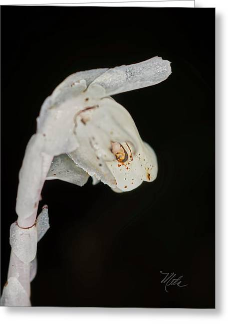 Indian Pipe Rabbit Head Greeting Card