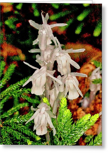 Indian Pipes On Club Moss Greeting Card