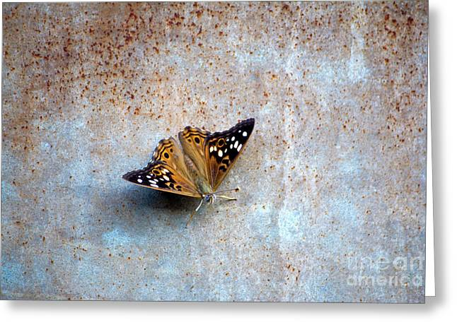 Industrious Butterfly Greeting Card