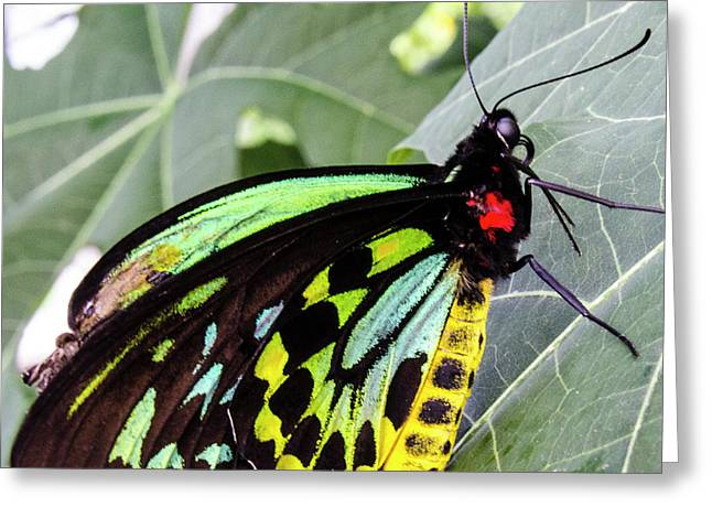 Insect Kaleidescope Greeting Card