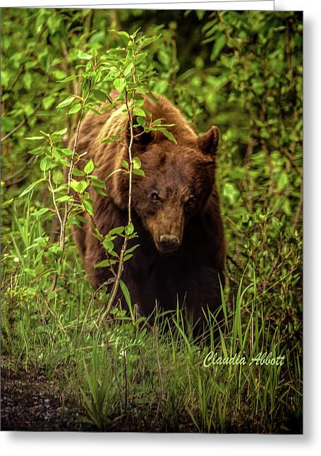 Greeting Card featuring the photograph Intense Grizzly by Claudia Abbott