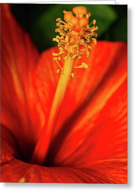 Into A Flower Greeting Card
