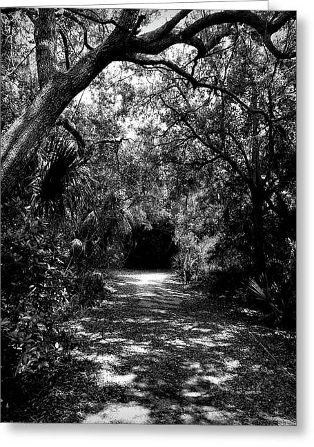 Into The Darkness Greeting Card