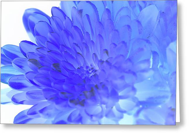 Inverted Flower Greeting Card