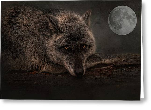 Its A Lonely Night  Greeting Card