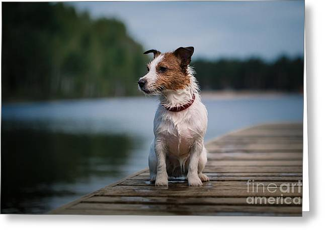 Jack Russell Terrier Dog Playing In Greeting Card