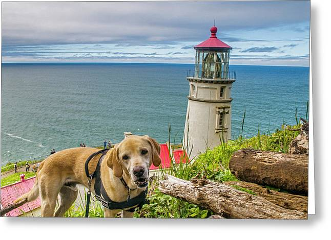Jackson At Heceta Head Lighthouse Greeting Card