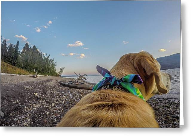 Greeting Card featuring the photograph Jackson Lake By Photo Dog Jackson by Matthew Irvin