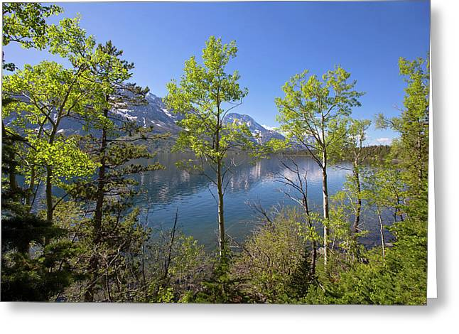 Greeting Card featuring the photograph Jackson Lake by Sue Collura