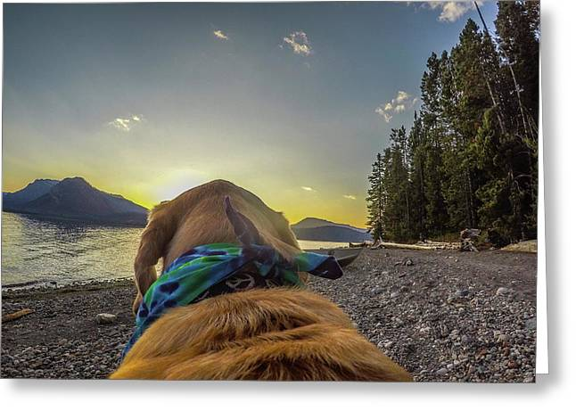 Greeting Card featuring the photograph Jackson Lake Sunset By Photo Dog Jackson by Matthew Irvin
