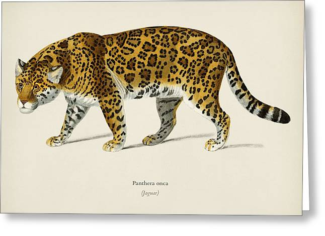 Jaguar  Panthera Onca  Illustrated By Charles Dessalines D' Orbigny  1806-1876  Greeting Card