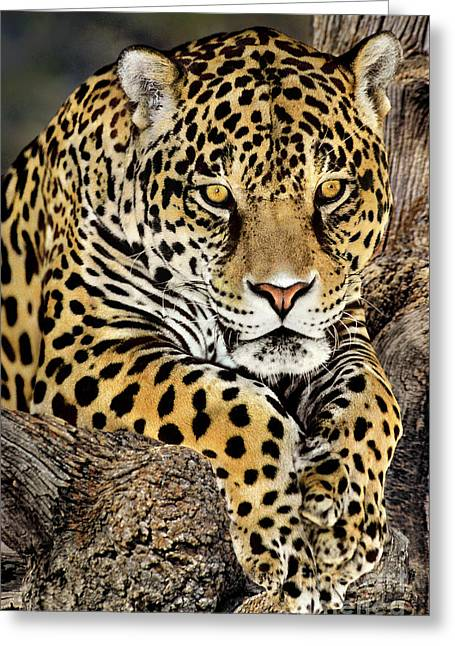 Jaguar Portrait Wildlife Rescue Greeting Card