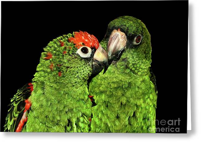 Jardine's Parrots Greeting Card
