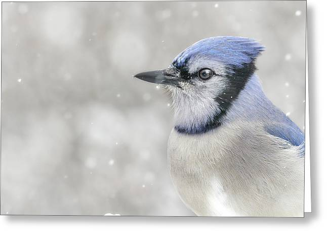 Jay In The Snow Greeting Card