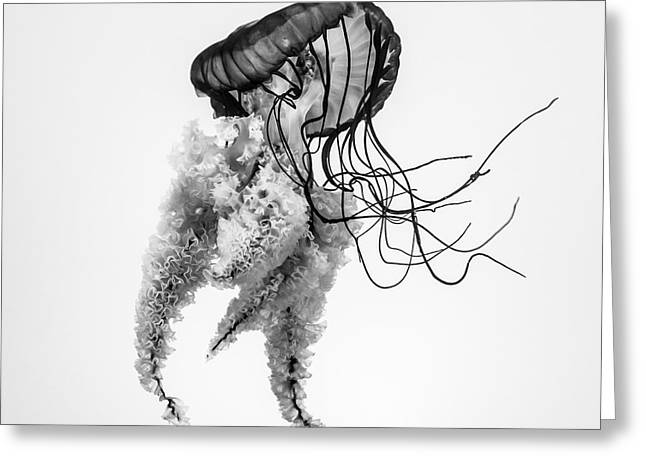 Jellyfish B+w Greeting Card