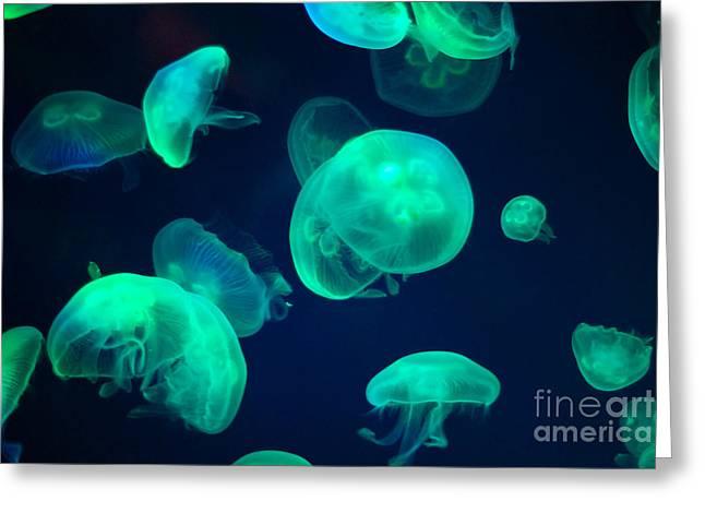 Jellyfish Greeting Card