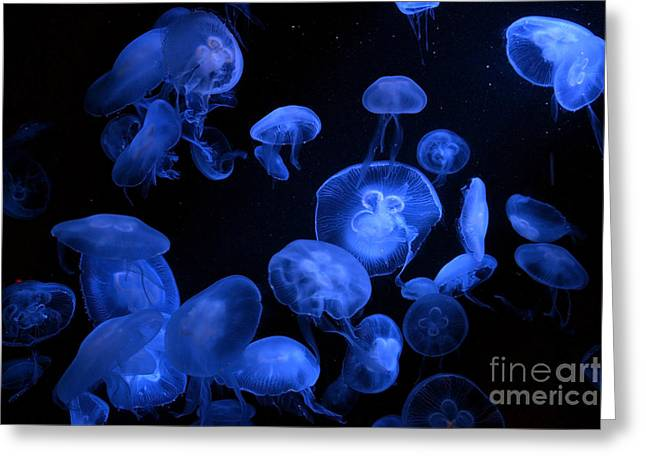 Jellyfish With Blue Light On Black Greeting Card