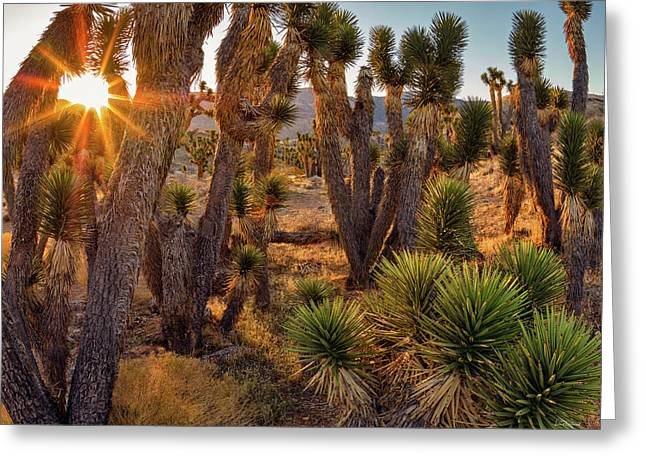 Joshua Trees Greeting Card by Leland D Howard