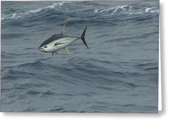 Jumping Yellowfin Tuna Greeting Card