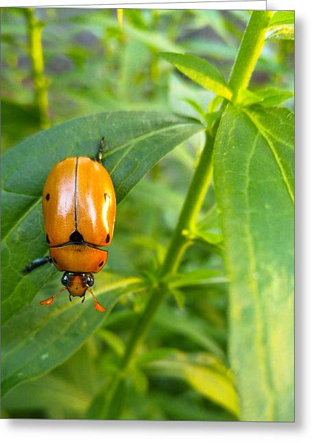 June Bug Greeting Card