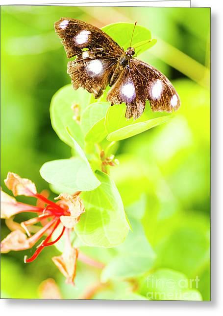 Jungle Bug Greeting Card