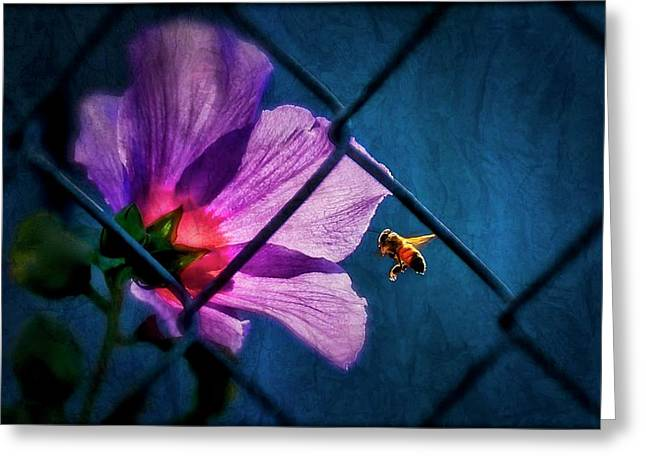 Just Beeing, Hibiscus And Bee Greeting Card