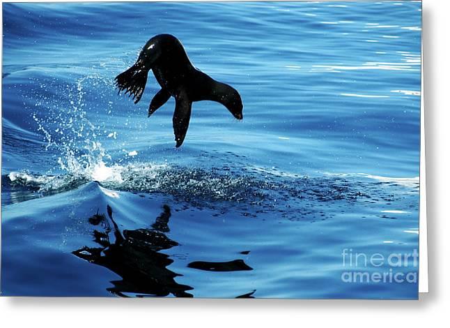 Juvenile Sea Lion In Rare Pose Mid Air Greeting Card