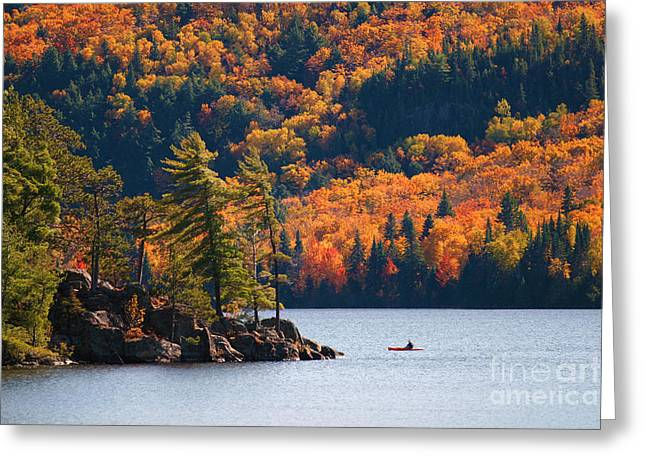 Kayaking In Algonquin Provincial Park Greeting Card