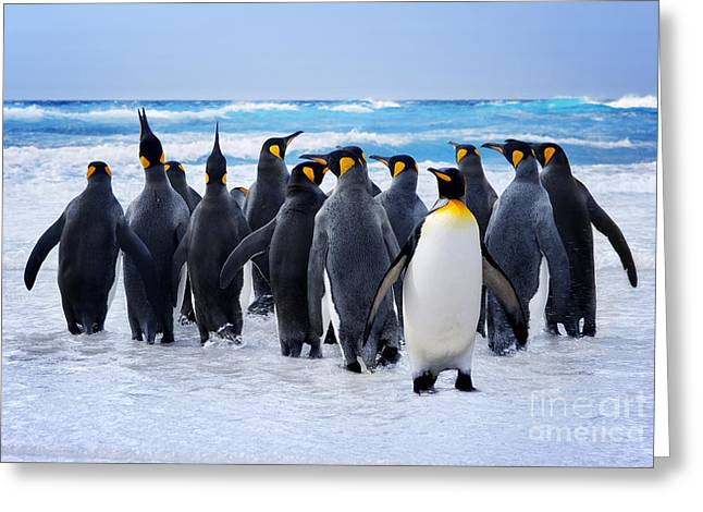 King Penguins Heading To The Water In Greeting Card