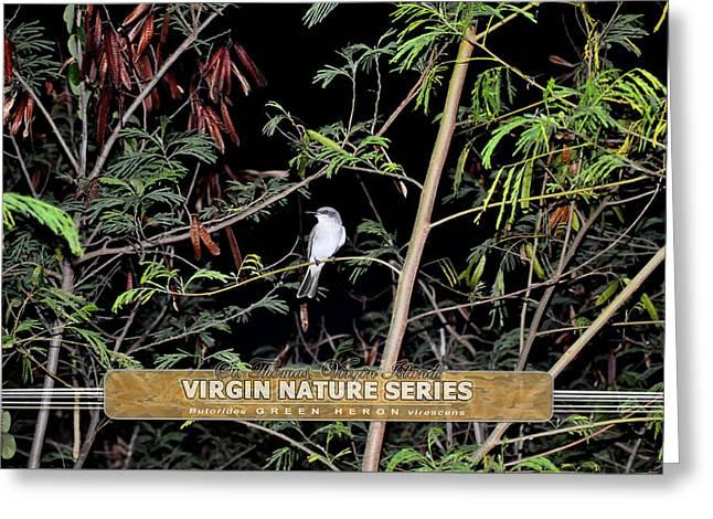 Kingbird In Casha - Virgin Nature Series Greeting Card