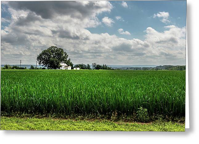 August In The Countryside Greeting Card