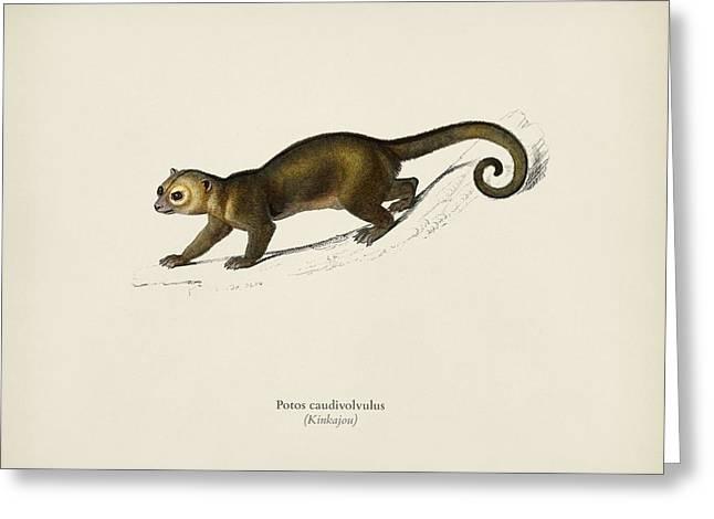 Kinkajou  Potos Caudivolvulus  Illustrated By Charles Dessalines D' Orbigny  1806-1876  Greeting Card