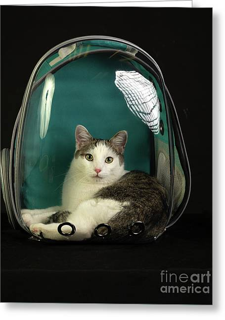 Kitty In A Bubble Greeting Card