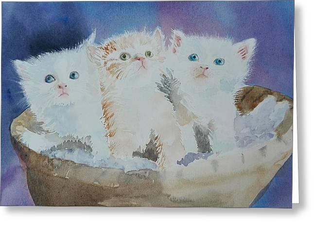Kitty Litter Greeting Card By Sandie Croft