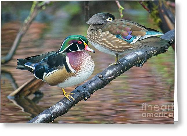 Kodachrome Ducks Greeting Card