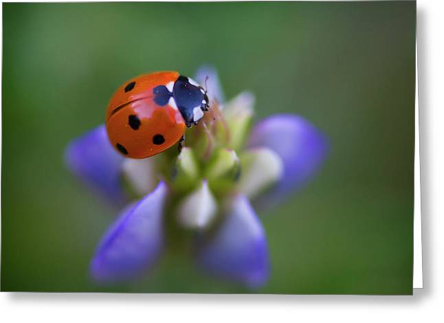 Greeting Card featuring the photograph Lady Bug by John Rodrigues