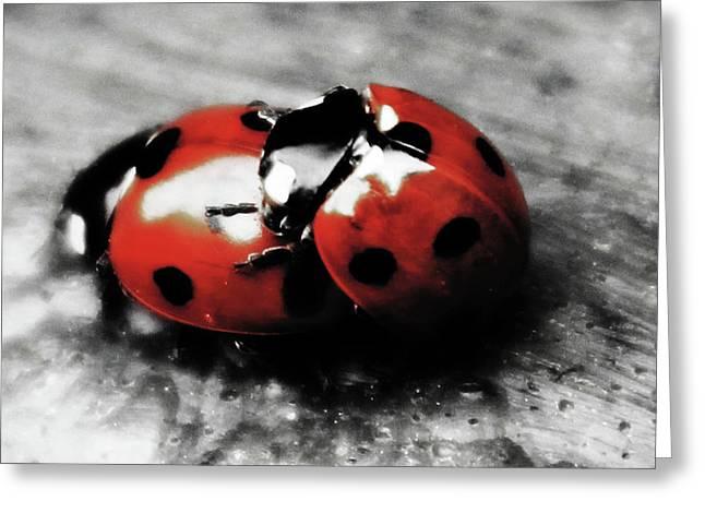 Lady Bug Loving Greeting Card