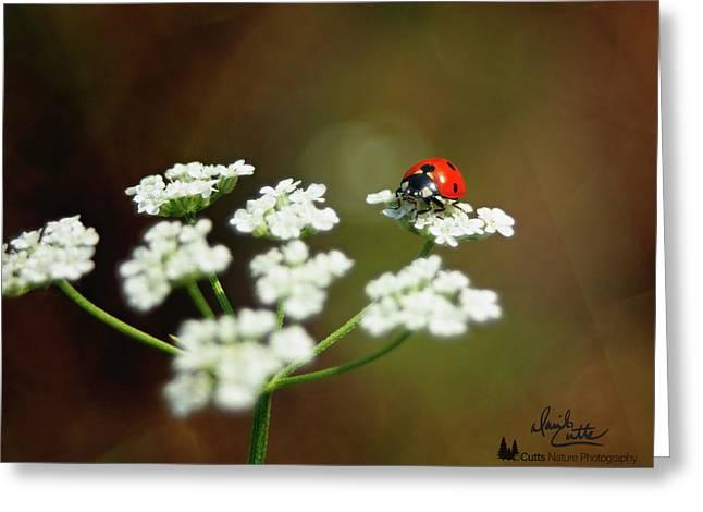 Ladybug In White Greeting Card