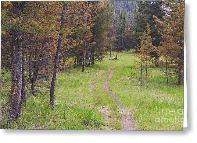 Landscape Image Of Hiking Trail In The Greeting Card