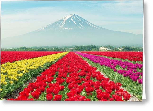 Landscape Of Japan Tulips With Mt.fuji Greeting Card