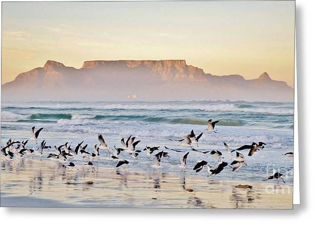 Landscape With Beach And Table Mountain Greeting Card