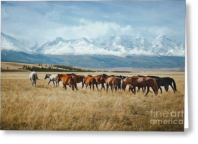 Landscape With Wild Horses Near The Greeting Card