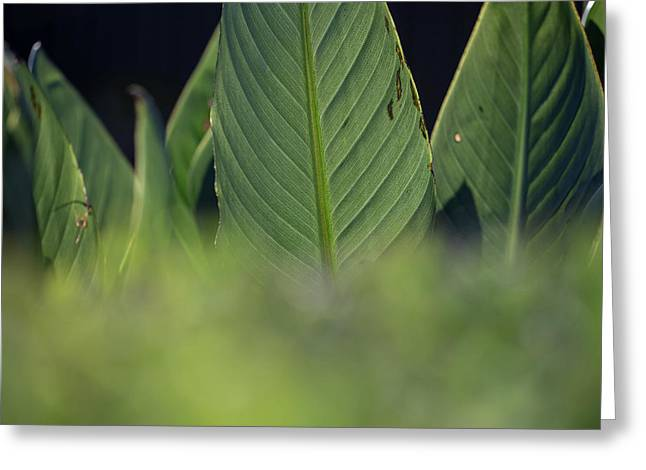 Large Dark Green Leaves Greeting Card