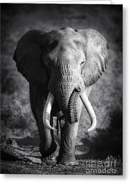 Large Elephant Bull Approaching Greeting Card by Johan Swanepoel