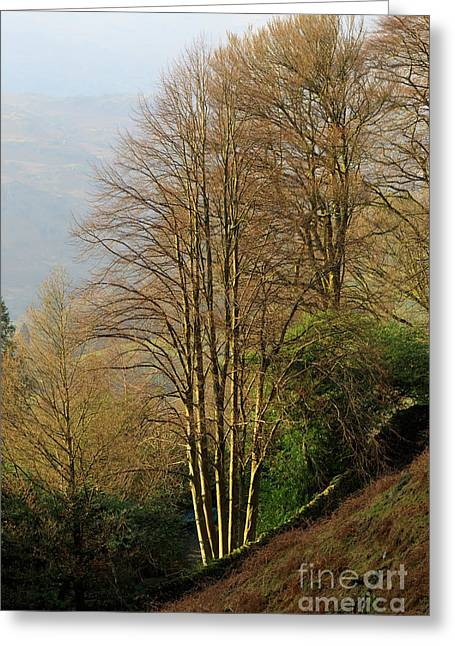 Late Afternoon Sun On Bare Trees In Autumn Near Grasmere Greeting Card