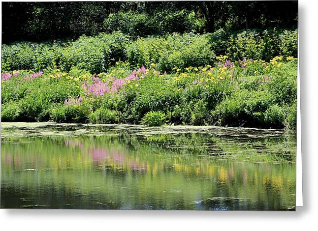 Lavender And Gold Reflections At Chicago Botanical Gardens Greeting Card