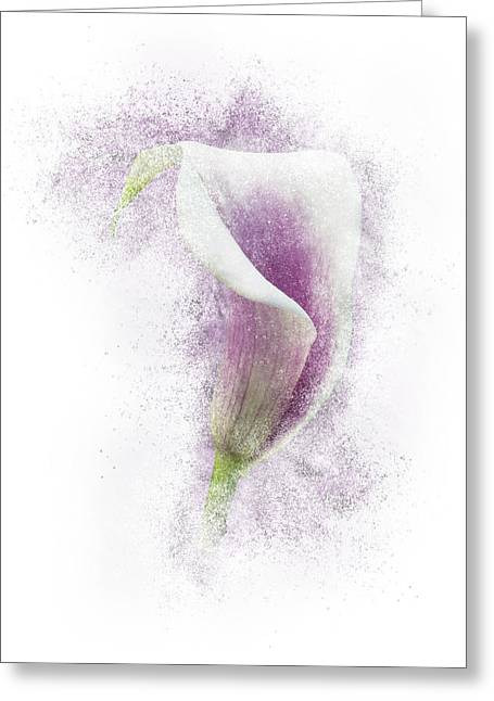 Lavender Calla Lily Flower Greeting Card